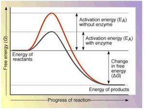 activation20energy